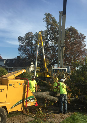tree-removal-services-1616