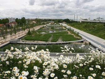 Jardins Filtrantes: Purificação natural de águas poluídas