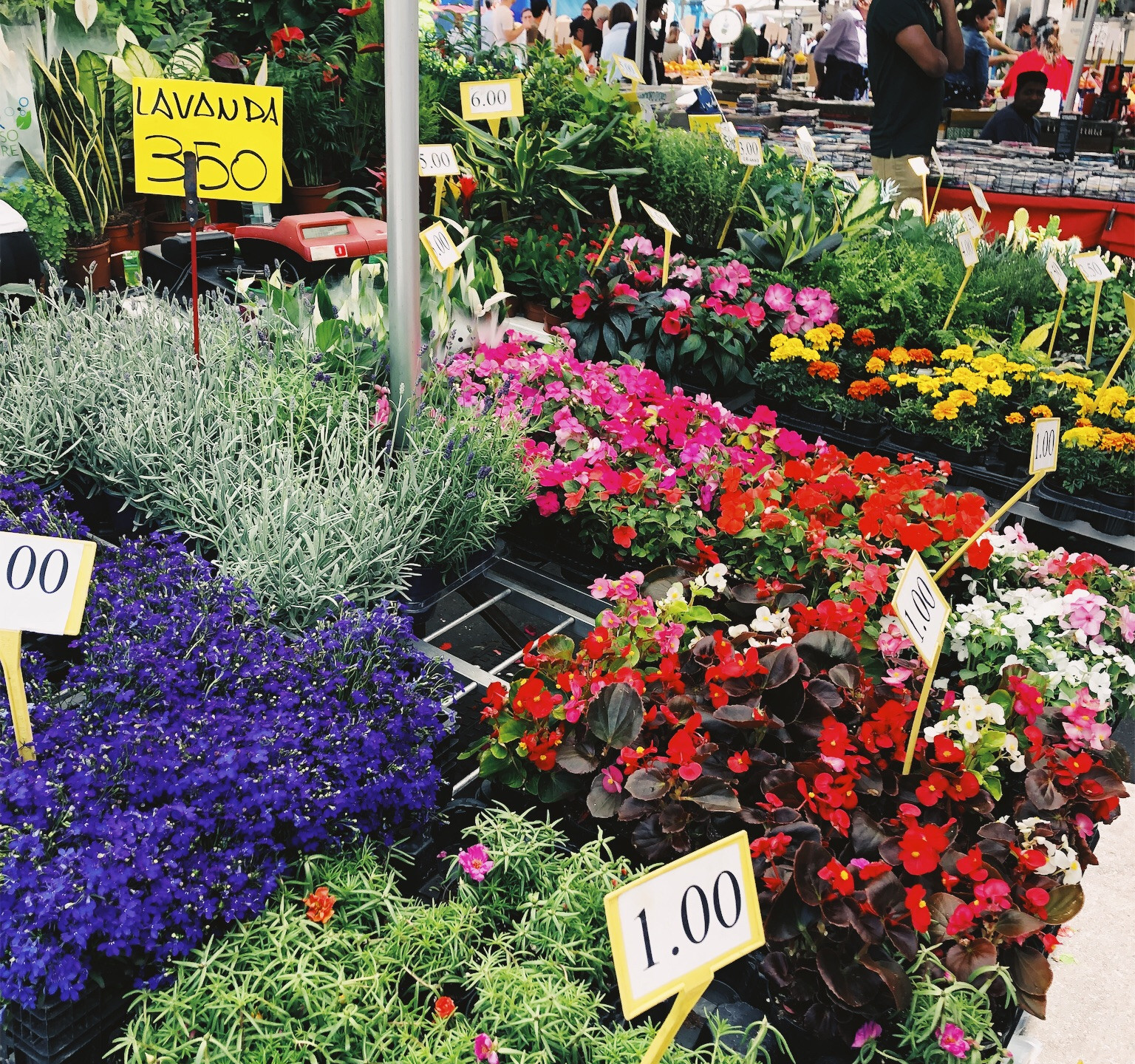 I wanted to buy an entire garden!