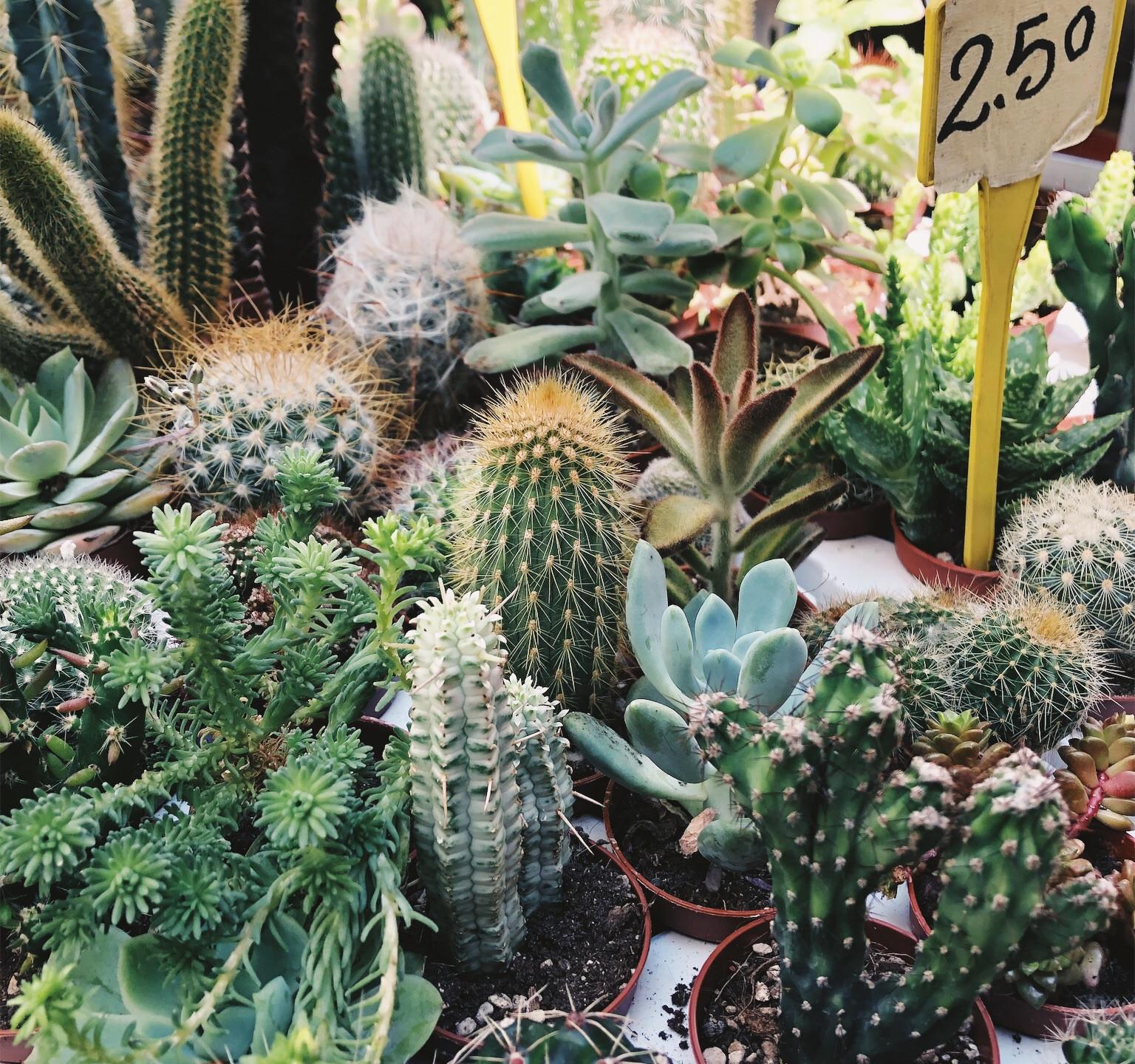 Succulent selections...