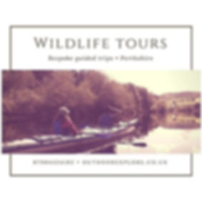 Wildlife Tours Scotland
