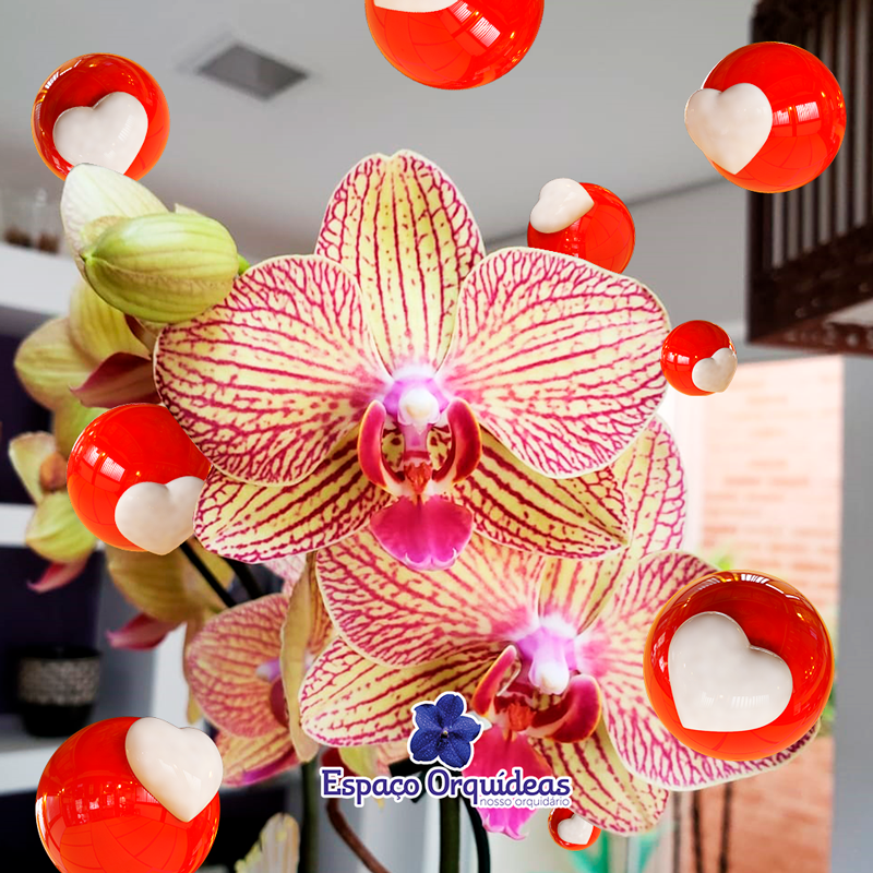 Espaço Orquídeas