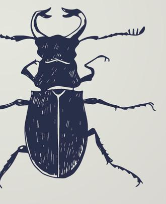 A Bug Story