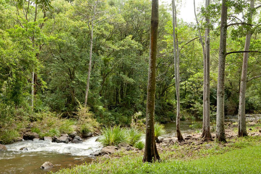 Obi Obi Creek 1