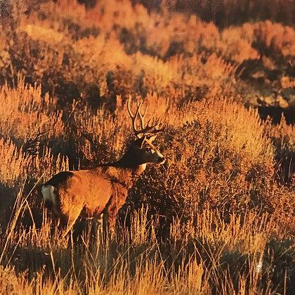 Mule Deer Back Home on the Range