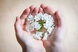 reflexology-cancer care-delicate-flowers-hands
