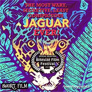 Jaguar2 copy.jpg