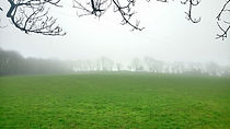 Field mist_rs.jpg
