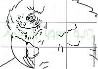 Parrot for pdf.jpeg