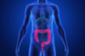 intestino-delgado-e1474481097242.jpg