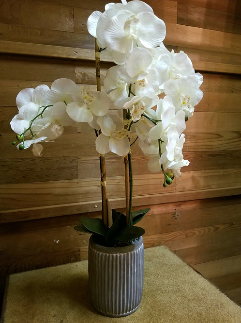 Orchid Display Pot