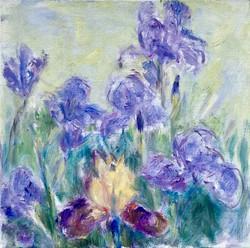 Flamer Iris