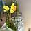 Thumbnail: Daffodil Tealight Panel