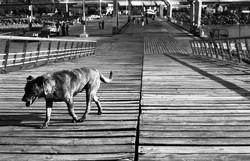 cane sul molo, porto di valparaiso,