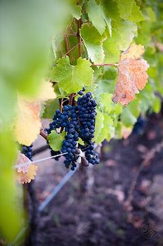 lasseter-winery-qyskdF-RqWA-unsplash.jpg