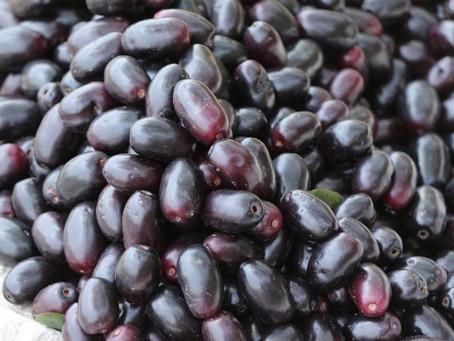 Purple mystery : A window to Diabetes