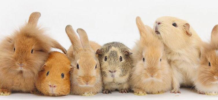 Small animal visits