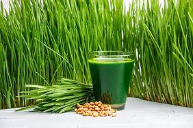 wheatgrass extract
