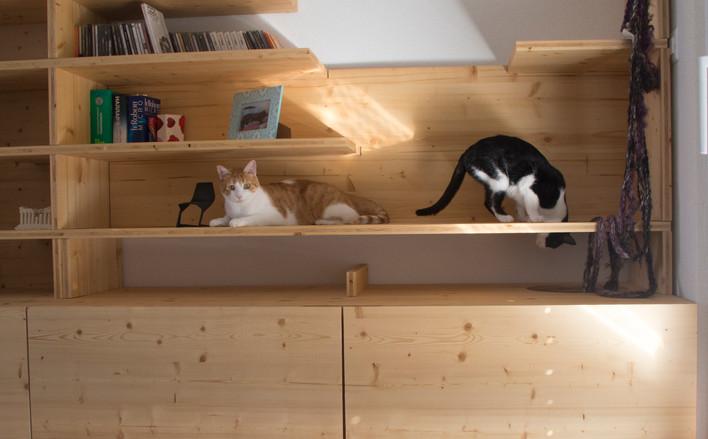 Bibliocat: terrain de jeu pour chats