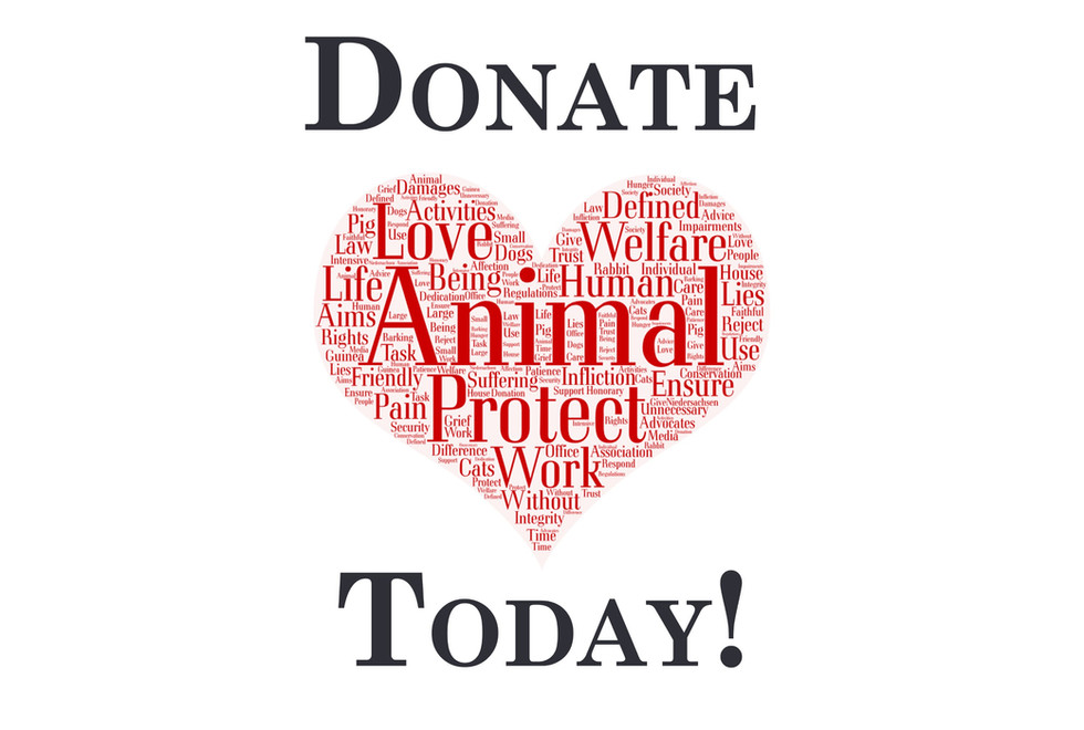 Donate to Happy Tails