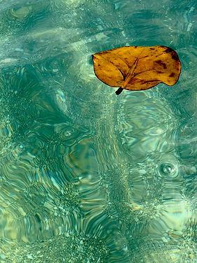Leaf of Life III