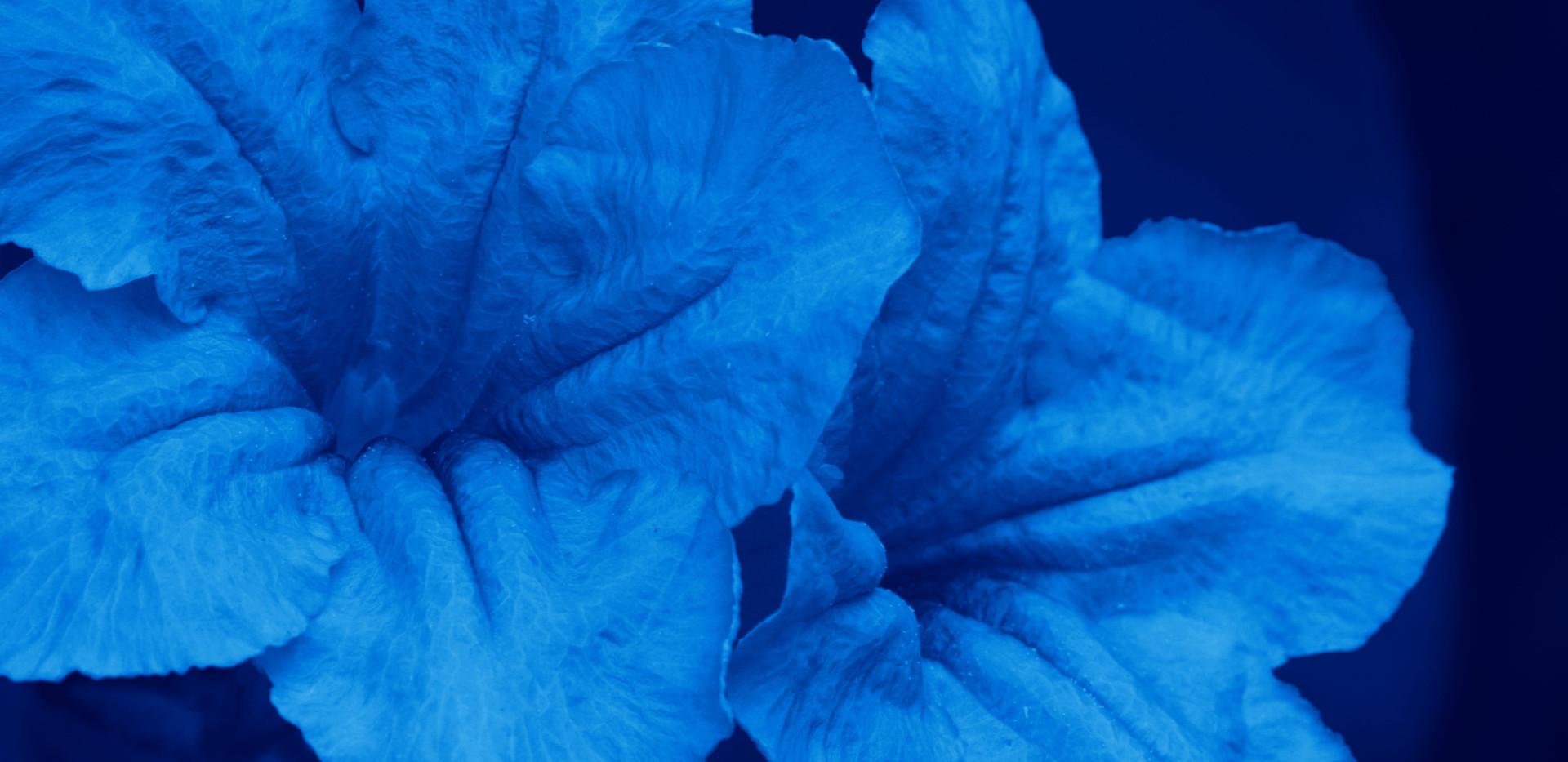 Folie A Deux III (I Bloom Blue Without You)