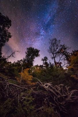 Stars over treeline in Adirondacks, NY