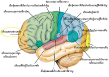 สมองตาย (Brain death) กับการตายทางการแพทย์ และการส่งต่อชีวิต