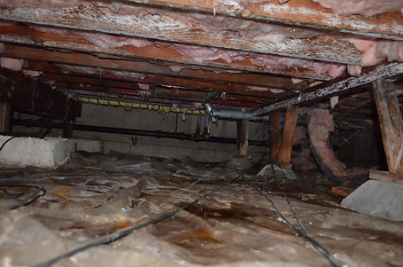 Basement Mold 9.jpg
