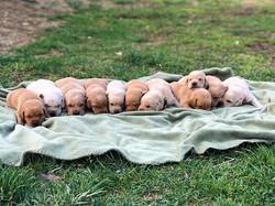Josie's Puppies spent their first little
