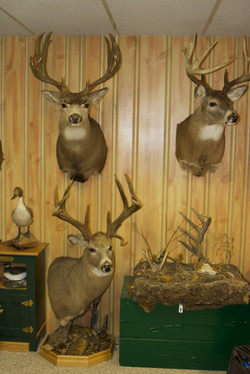 Bucks at the Lodge