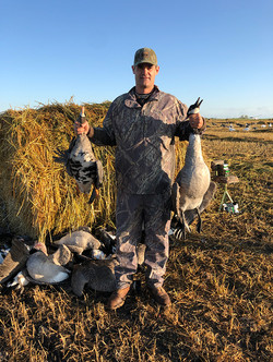 Nice geese