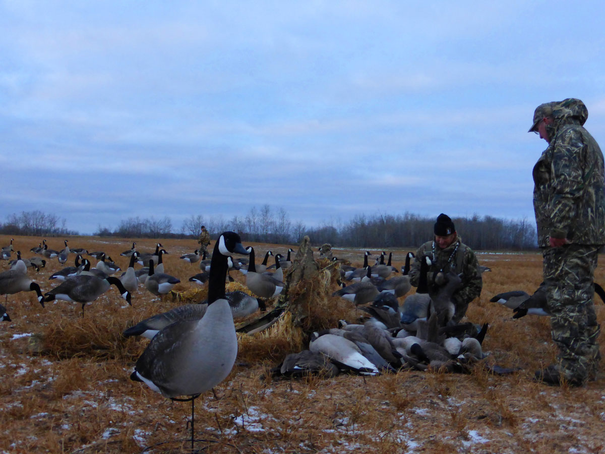 Decoys look good