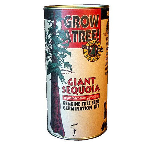 Plant a Giant Sequoia