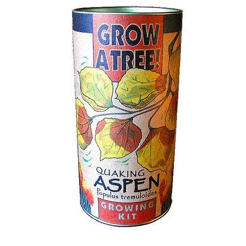 Quaking Aspen Tree Kit