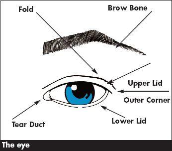 The Eye Fold Brow Bone Upper Lid Outer Corner Lower Lid Tear Duct Eyeshadow Makeup Blog