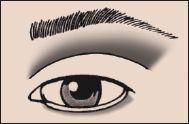 Flat Eye Eyeshadow 101 Makeup Blog