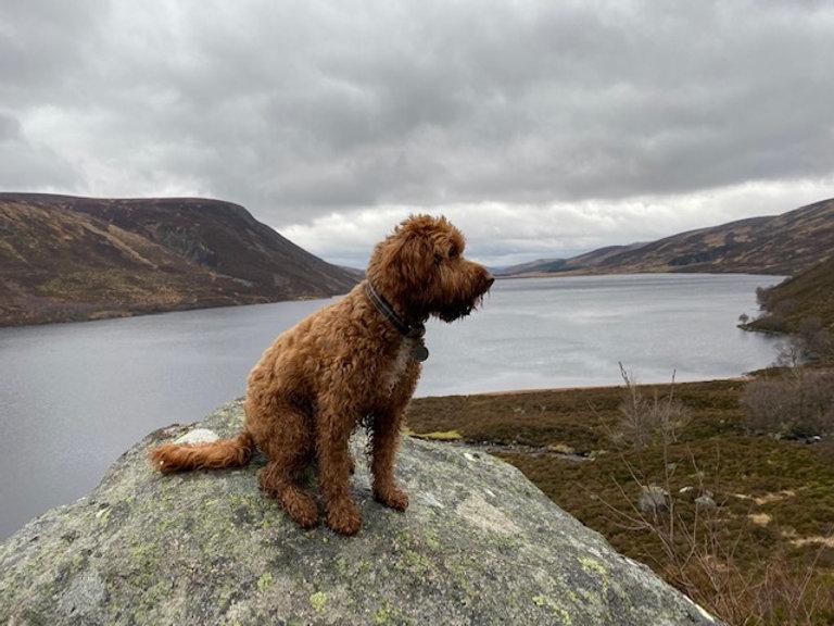 Teddy at Loch Muick.jpg
