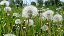 Gräserpollen im Anflug
