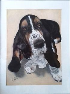 Lewie - Basset Hound