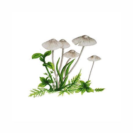 Mushrooms ext