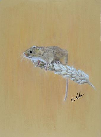 Harvest Mouse 500px.jpg