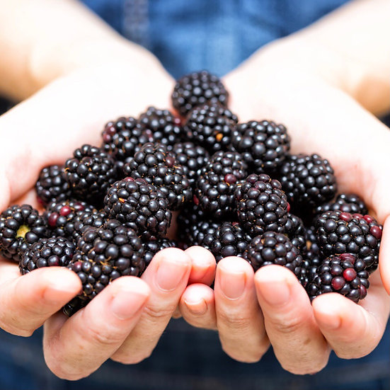 Blackberry Punnet 125g