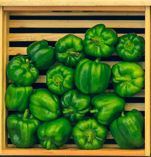 Capsicum Green (large)