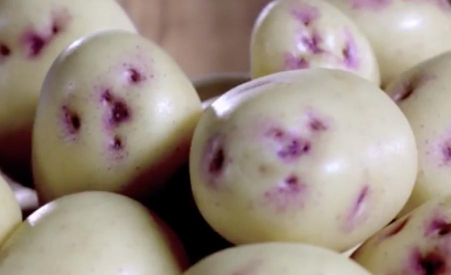 Potato Kestrel 5KG Bag