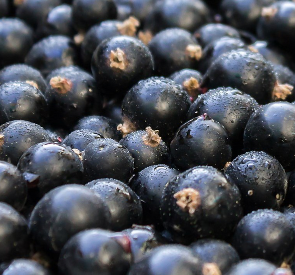 Australian Frozen Blackcurrants 1KG