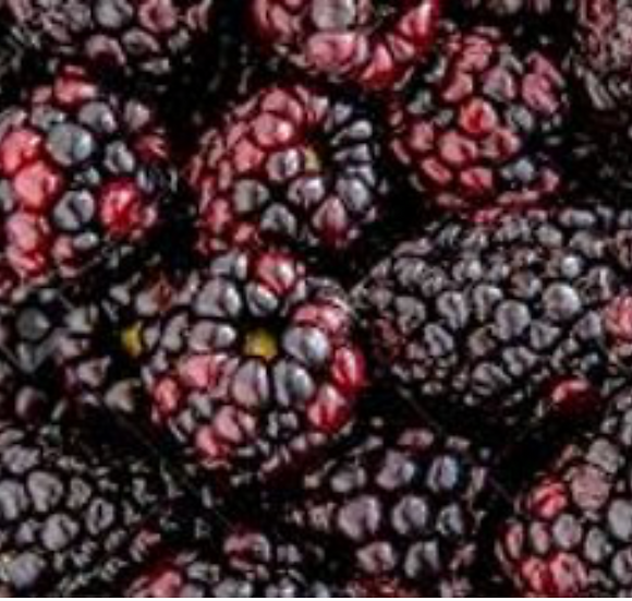 Australian Frozen Boysenberries 1KG