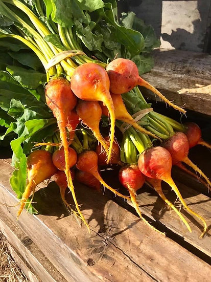 Beetroot Bunch Golden (BABY)