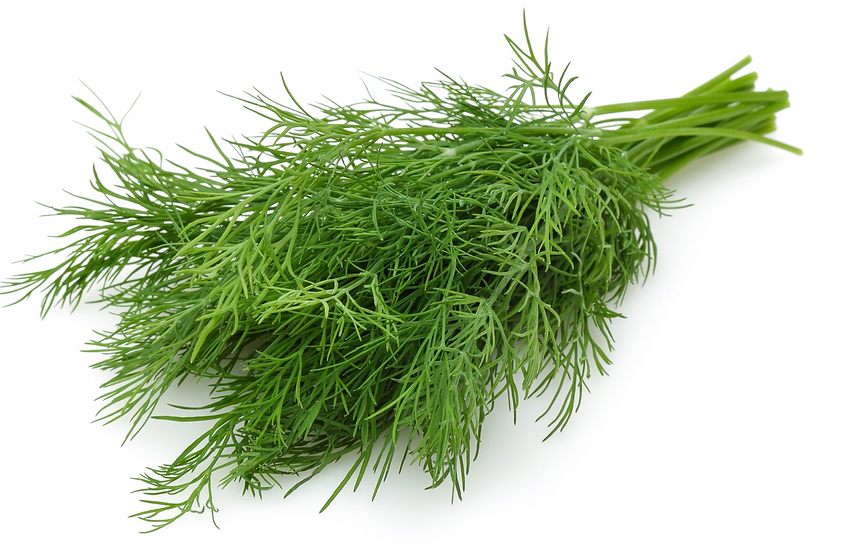 Dill Bunch (Large)