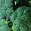 Thumbnail: Broccoli KG